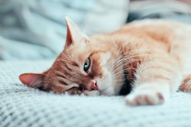 Co dělat, když má kočka akné?