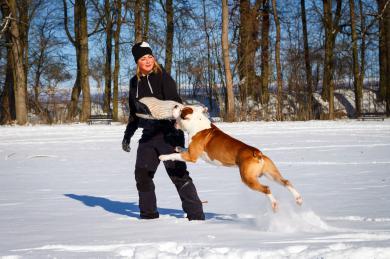 Představení: Škola výcviku psů