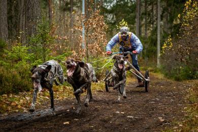 Úspěchy českých musherů