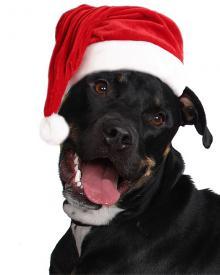 Świetne wskazówki na prezenty świąteczne dla psów