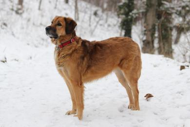 Zimowa opieka nad psem