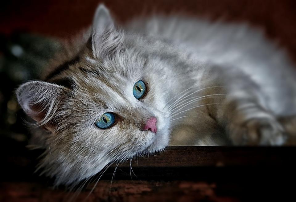 Posiadanie kota przynosi również korzyści zdrowotne