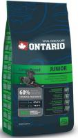 ONTARIO   JUNIOR LARGE