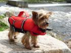 Wyporu kurtka dla psa życie