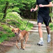 Smycz z pasem do biegania 2cm / 90-130cm